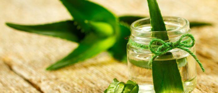 Бородавка и алоэ: лечение, удаление, состав растения