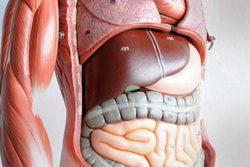 Угри на спине: причины, как лечить, симптоматика